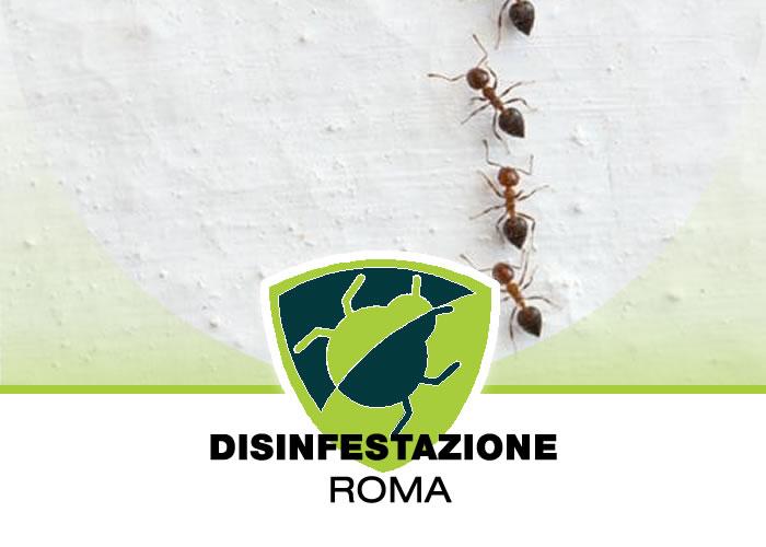 Eliminazione delle formiche dagli appartamenti e dalle Case a Roma