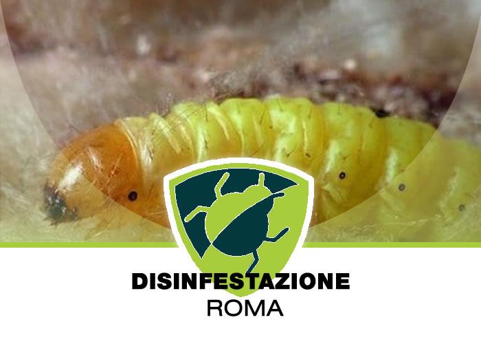 Disinfestazione definitiva delle larve di insetti all'interno di giardini, orti, appartamenti e ovunque ce ne fosse bisogno a Roma e nel Lazio