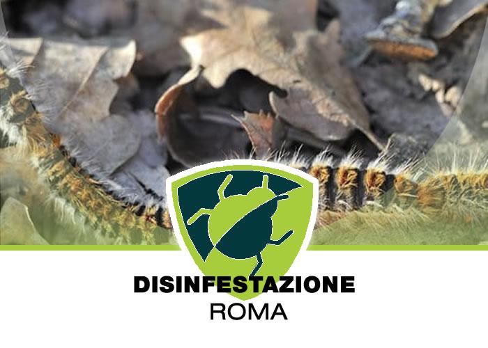 Allontanamento Processionarie a Roma
