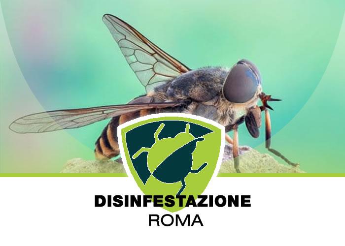 Allontanamento ed eliminazione dei Tafani dalle case in campagna di Roma