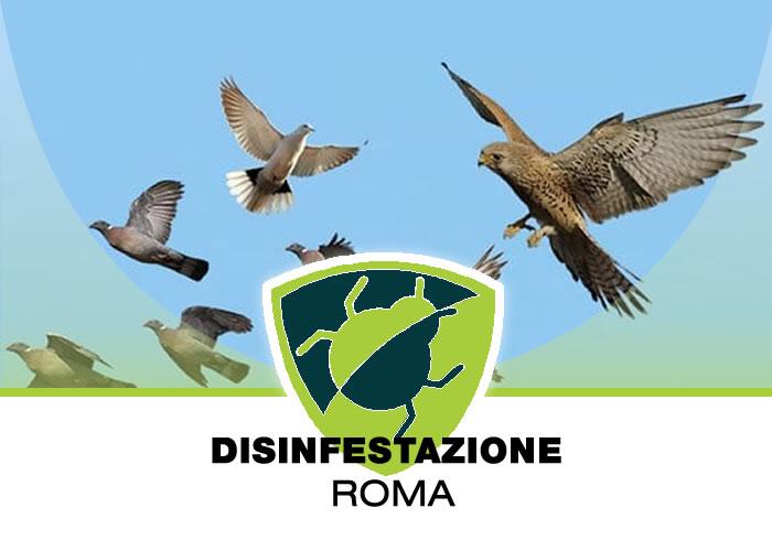 Allontanamento Volatili a Roma