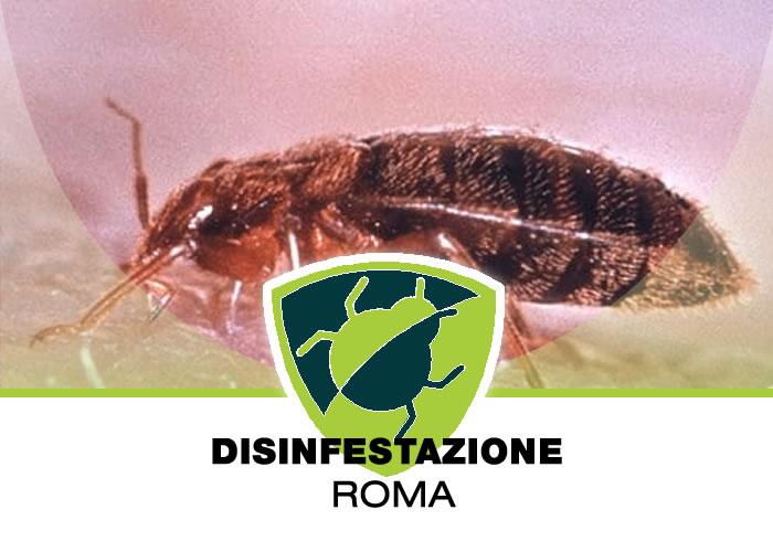Allontanamento Zecche a Roma
