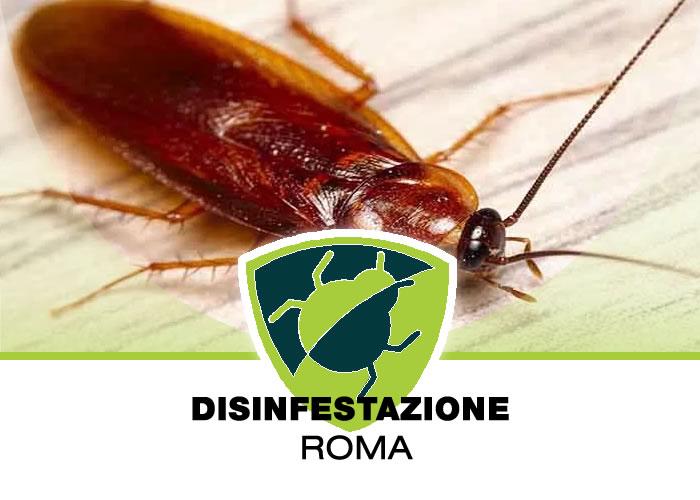 Deblattizzazione Blatte e Scarafaggi a Roma