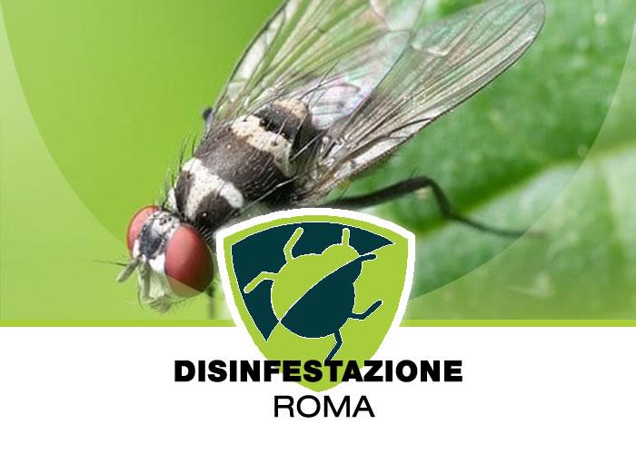 Disinfestazione definitiva delle mosche a Roma