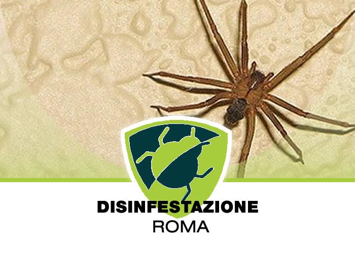 Disinfestazione Ragni a Roma