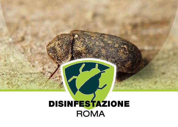 Disinfestazione Tarli a Roma