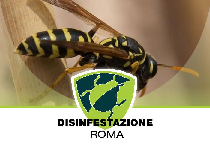 Disinfestazione Vespe a Roma