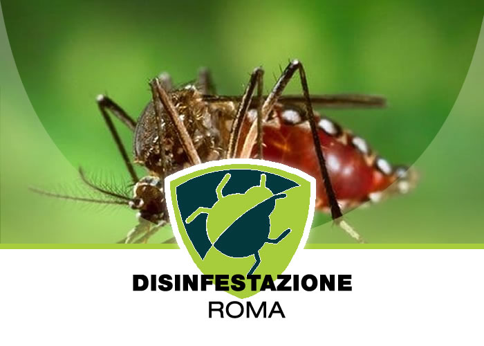 Muratella - Disinfestazione In Casa a Muratella